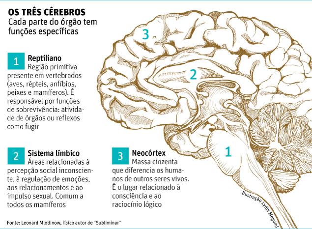 Três Cérebros
